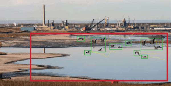 bird on pond - industrial